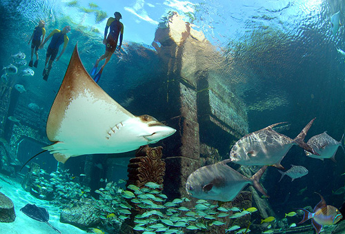 Snorkeling Adventures at Atlantis Paradise Island